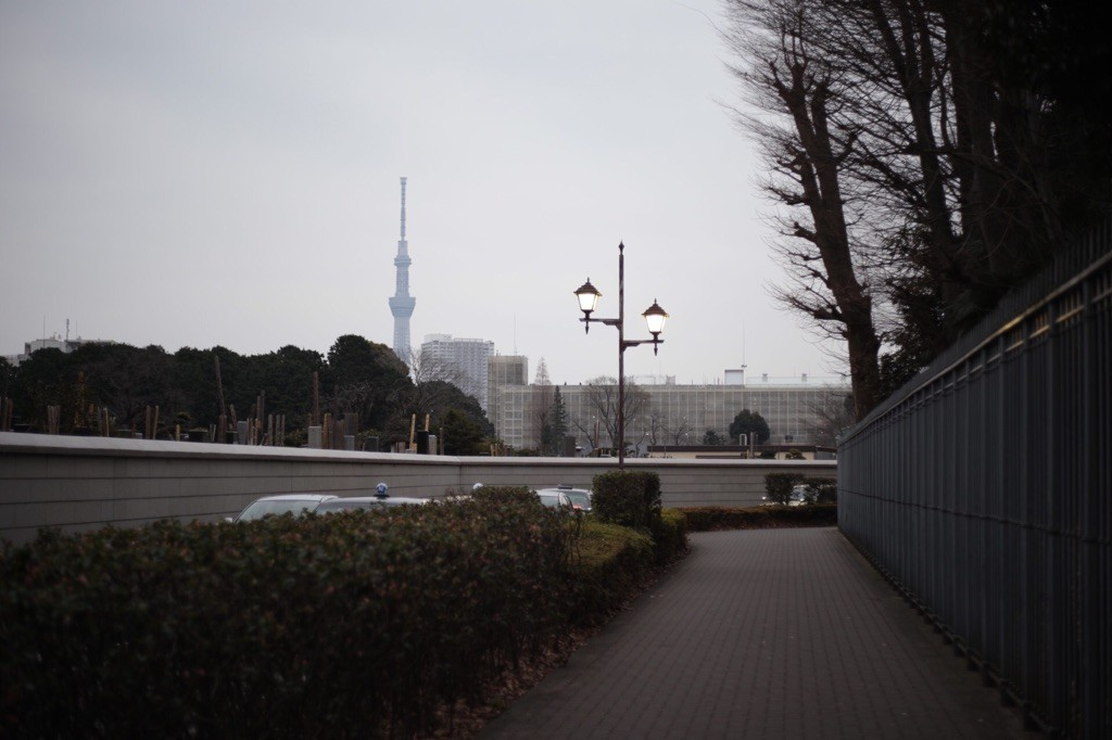 上野寛永寺〜上野中学校の霊園付近からのスカイツリー(やや絞った)